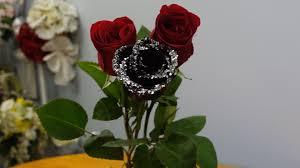 Black Rose Flower How To Make A Black Rose Youtube