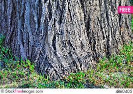 thick tree bole free stock photos images 4860405