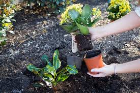 from pot to garden how to transplant flowers outdoors