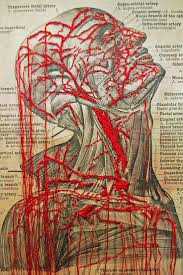 67 best beautiful anatomy images on pinterest draw frames and death