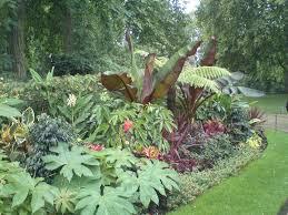 206 best jungle theme garden images on pinterest tropical plants