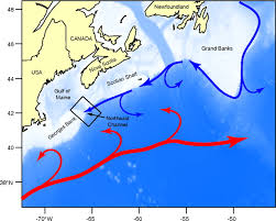 Map Of The Gulf Stream Nutrient Regime Shift In The Western North Atlantic Indicated By