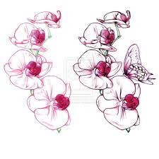 orchid butterfly garden pencil and in color orchid