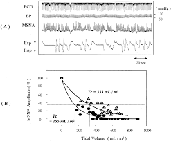 respiratory modulation of muscle sympathetic nerve activity in