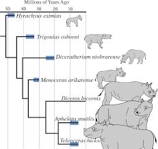 rhino family tree