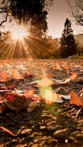 cute baby boy autumn leaves wallpapers 25 unique autumn wallpaper hd ideas on pinterest fall