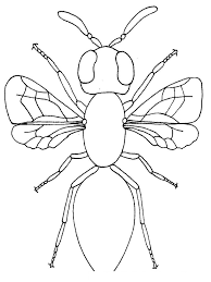 impactful insect coloring pages known different article ngbasic com