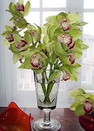 Orchid Cut Flowers - 101 best orchids images on pinterest orchid flowers flowers and