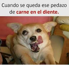 Memes De Chihuahua - para chihuahuas tu web de chihuahuas consejos y productos