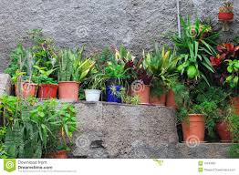 small potted plants stock image image 13943991