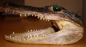 alligator claws sale or transfer of alligator products