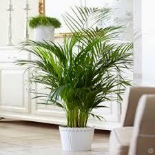large leaf house plants highly detailed 3d model of house plants