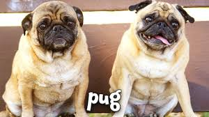 Types Of Dogs Types Of Dogs Learn About Dog Breeds For Kids Youtube