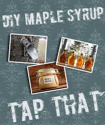 Backyard Maple Syrup by 74 Best Tap Tap Tap For Maple Syrup Images On Pinterest Maple