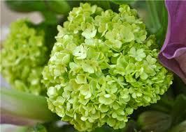 Lime Green Flowers - green flowers mercury glass vases manzanita branches