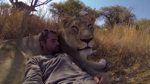 man tries to hug a wild lion you won u0027t believe what happens next