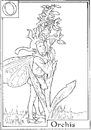 coloring sheets fairy coloring pages flower fairies color