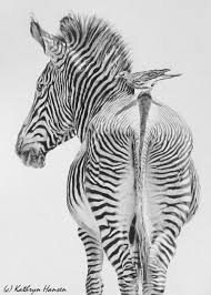 274 best graphite drawings images on pinterest watercolor