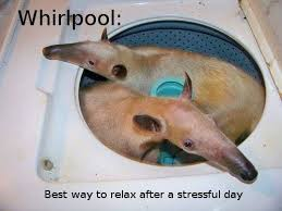 Anteater Meme - 25 funny animal pics and memes to make you smile funny gallery