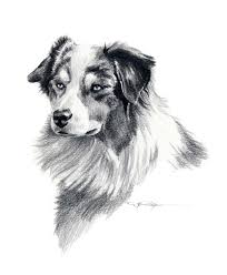 australian shepherd fabric australian shepherd dog art print signed by artist dj rogers