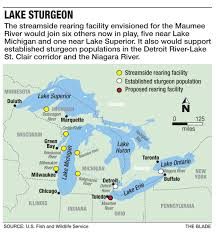 Put In Bay Ohio Map by Giant Sturgeon Poised To Spawn Again The Blade