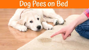 peeing the bed dog keeps peeing on bed govegan me