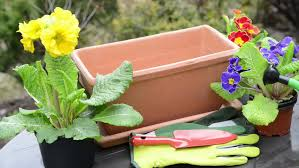 planting primrose into a balcony flower box stock footage video