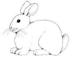 rabbit outline drawing google billedkunst