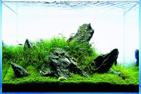 let u0027s start with a hardscape materials aquascaping wiki