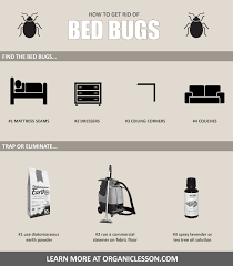 Powder That Kills Bed Bugs 6 Natural Ways To Instantly Get Rid Of Bed Bugs