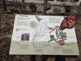 native plant species stuyvesant cove park a sustainability gem uncovered by daisy hoyt
