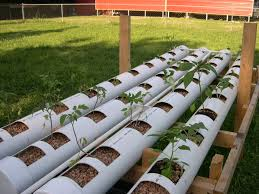 backyard aquaponics u2022 view topic growing hops