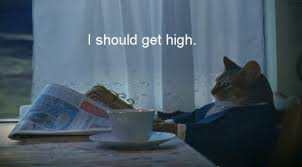Newspaper Cat Meme - i should get high drugs are evil pinterest