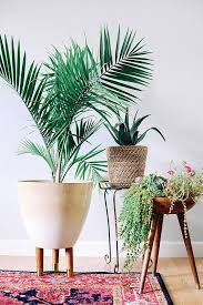 home interior plants 136 best p l a n t s images on cactus plants indoor