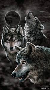 imagenes q interesante lobos lea un interesante artículo sobre este tema en el siguiente