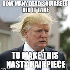 Dead Squirrel Meme - donald trump imgflip