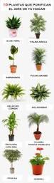 best 25 inside plants ideas on pinterest indoor house plants