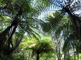 native plants of nz lochmara bay new zealand hotelroomsearch net