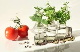herbs indoors foodista how to grow herbs indoors