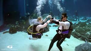 underwater wedding underwater wedding at aquarium