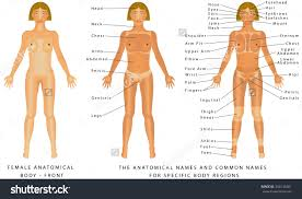 Anatomy Of Women Body Human Anatomy Including Body Parts Anatomy Of Body Parts Free