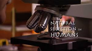 the making of the fittest natural selection in humans hhmi