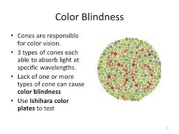 Cause Of Color Blindness Eye And Vision Exercise 26 Bi 232 External Features Notice The