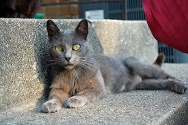 so i found a stray cat cats