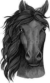 Black Horse Mustang Horse Full Face Artistic Portrait Mustang Stallion With Mane