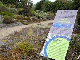 plants native to new zealand signage complements plants dunedin botanic garden
