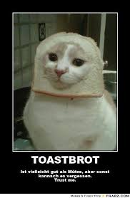 Cat In Bread Meme - cat toast meme 28 images cat toast meme generator xxxchange