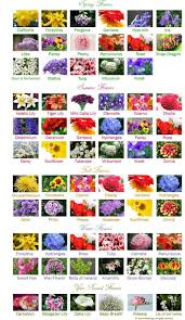 Names And Images Of Flowers - 45 best flower charts images on pinterest flowers flower