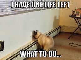 Depressed Pug Meme - depressed cat meme guy
