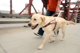 Blind Dog And His Guide Dog Guide Dogs For The Blind Guide Dog Training